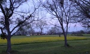 house in springtime 3
