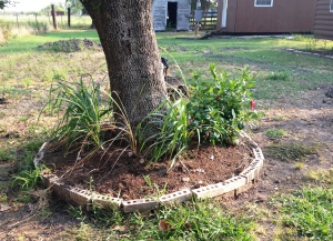 new garden 3