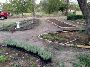 new garden 5